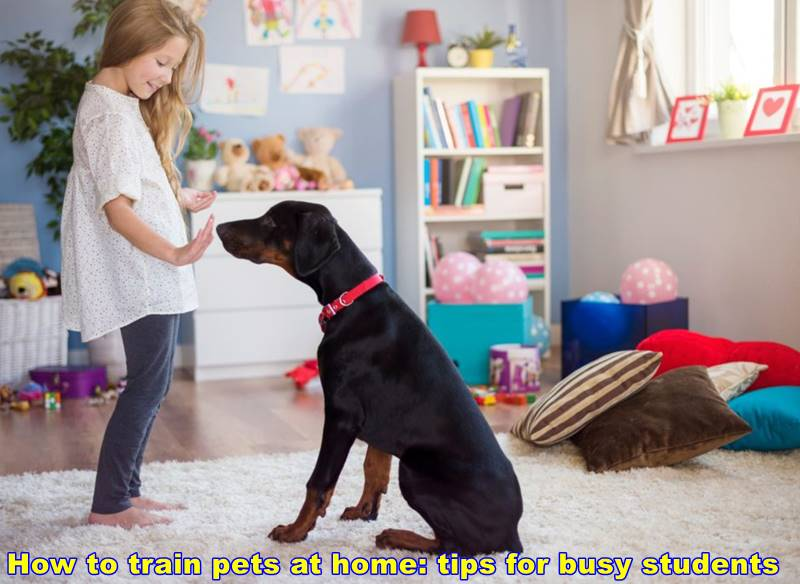 How to train pets at home: tips for busy students